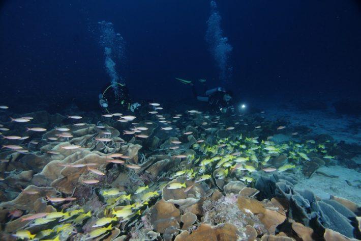 terumbu-karang-di-pulau-wairundi-taman-nasional-teluk-cendrawasih-2